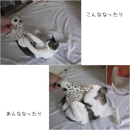 catsこんな