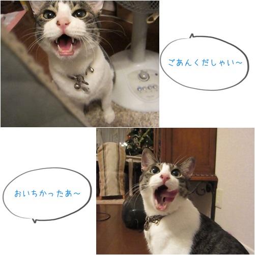 catsごあん