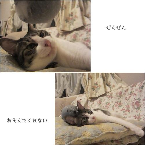 catsあそぼ