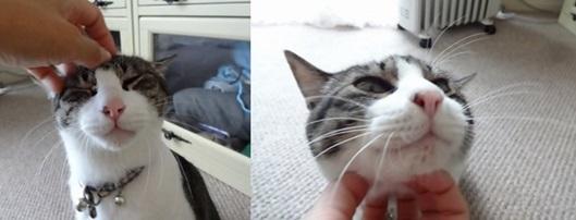 catsこちょこちょ