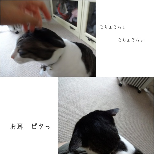 catsお耳