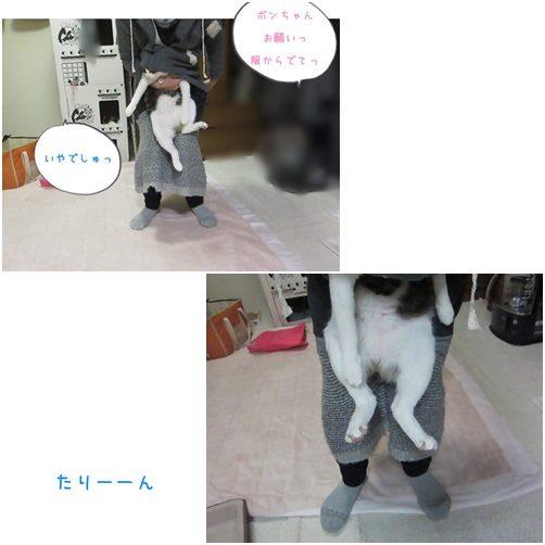 catsたりん