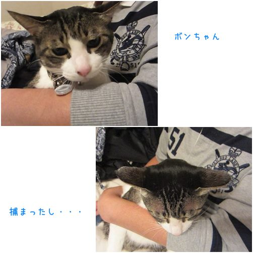 cats塚◎