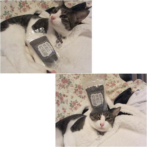 cats竹