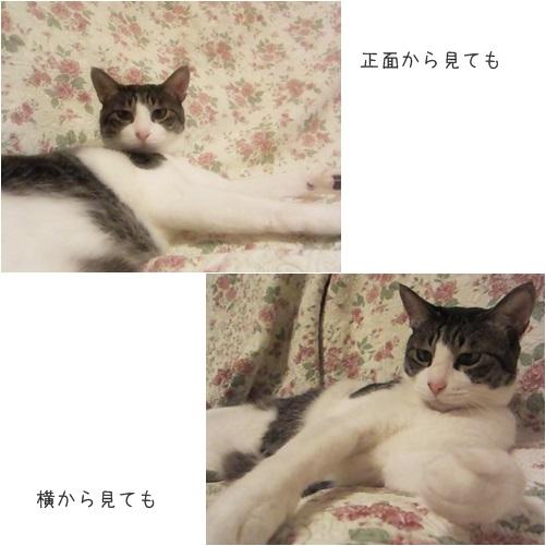 cats見る