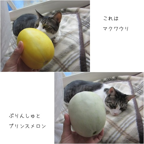 catsメロン