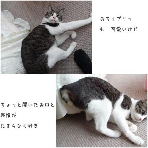 cats好き
