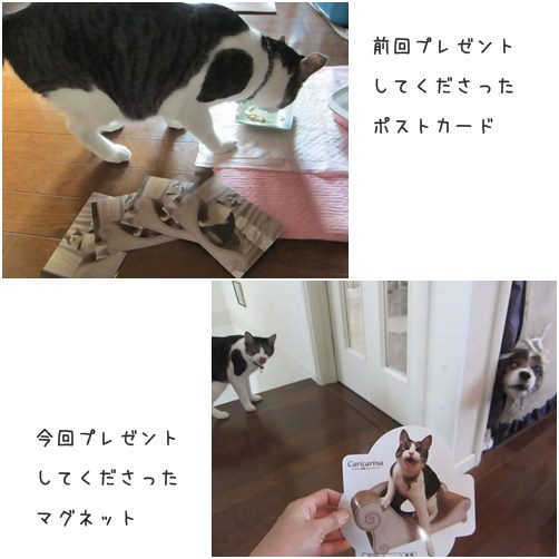 catsプレゼント