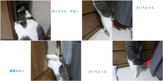 catsズボ