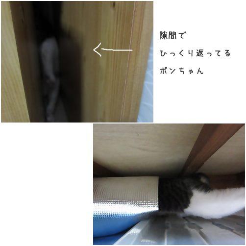 cats1_20140621172620afa.jpg
