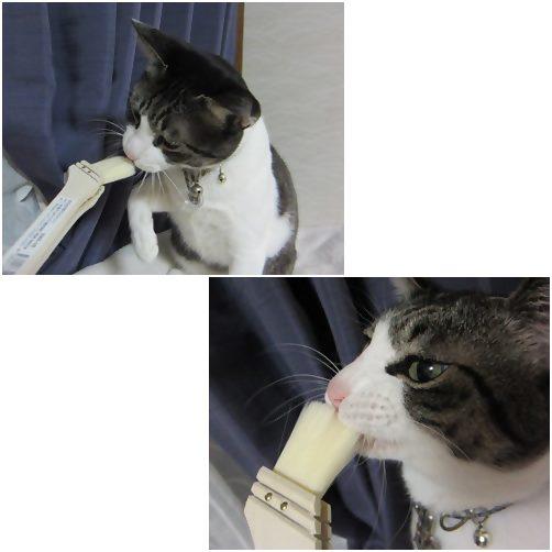 cats1_20140803185401b24.jpg