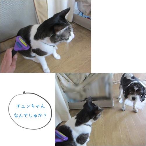 cats1_20140811151011056.jpg