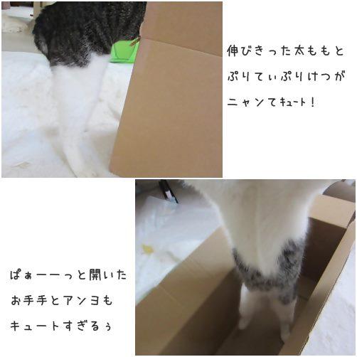 cats1_20140906193619b91.jpg