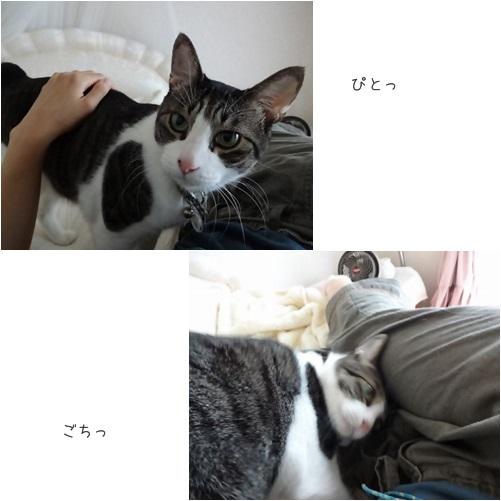 cats57.jpg