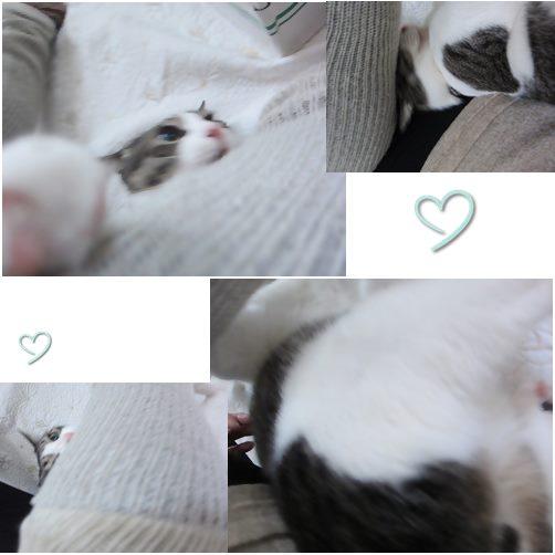 cats5_20140530205744495.jpg