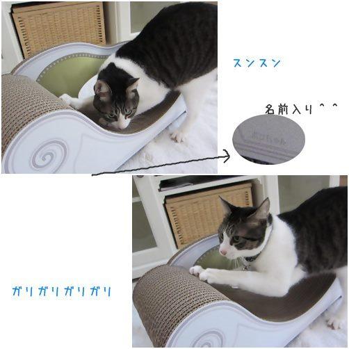 cats5_20140906193620876.jpg