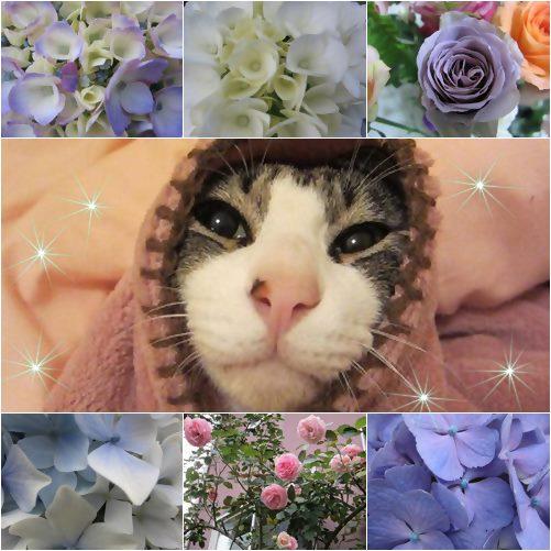 cats_20130715182516_20140715005029cf9.jpg