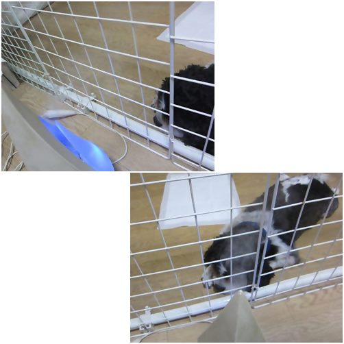 cats_2014052619262249e.jpg