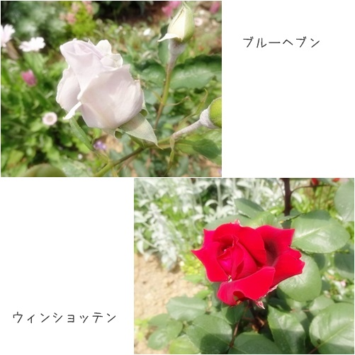 cats_2014060417013939a.jpg