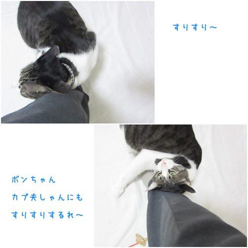 cats_20140621181312b90.jpg