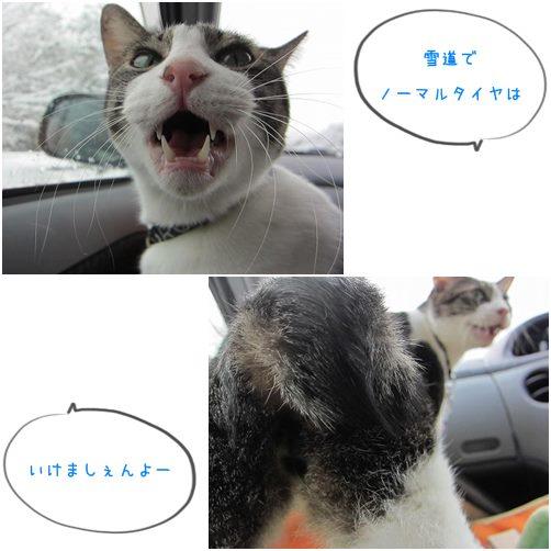 cats_201406242043374dc.jpg