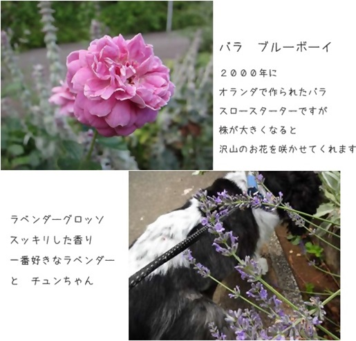 cats_20140703182604f69.jpg