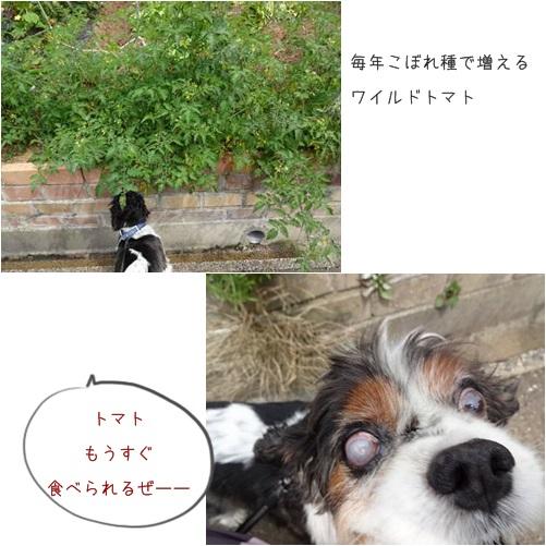 cats_2014070516220554d.jpg