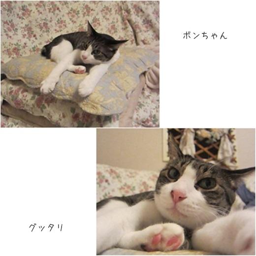 cats_2014071601040600d.jpg