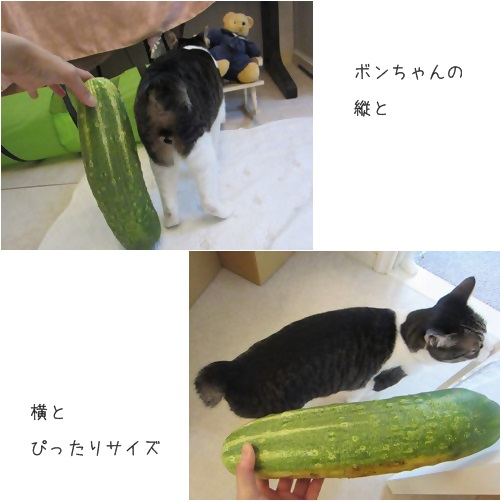 cats_2014080914554940f.jpg