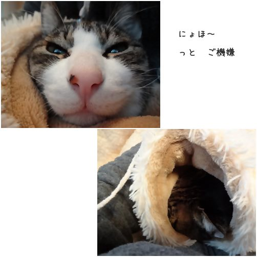cats_2014082317290427d.jpg