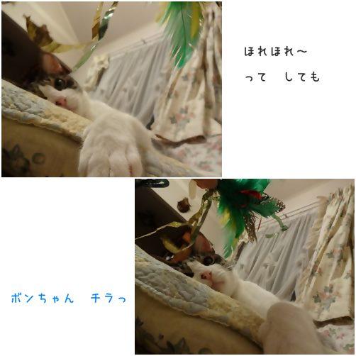 cats_20140826185954ca3.jpg