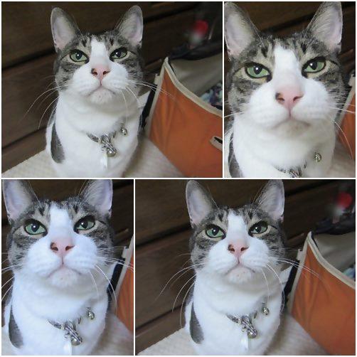 cats_201409032108231f1.jpg