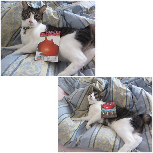 cats_20140908175722b13.jpg