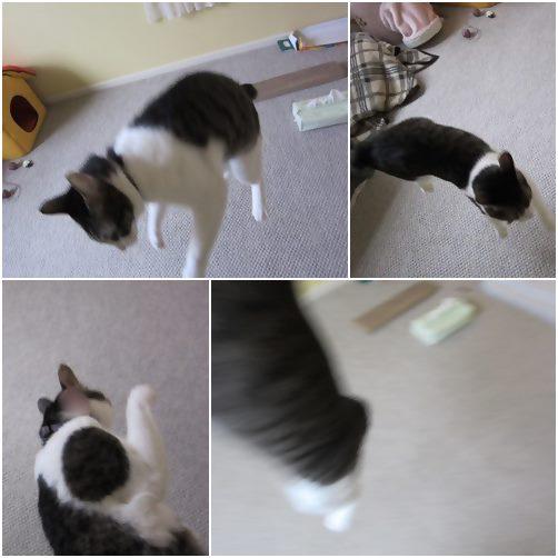 cats_20140913003742840.jpg