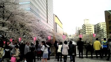 2014春-目黒川桜見物1
