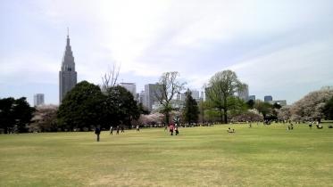 街中桜2014-01