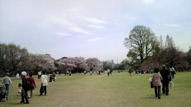 街中桜2014-03