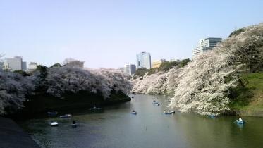 街中桜2014-05