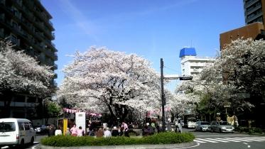 街中桜2014-07