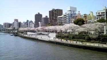 街中桜2014-17