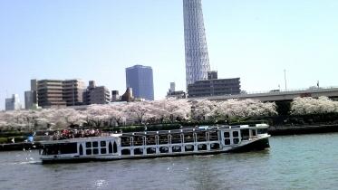 街中桜2014-18