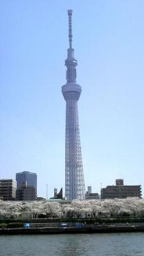 街中桜2014-19