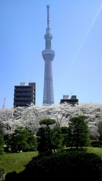 街中桜2014-20