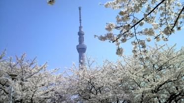 街中桜2014-21