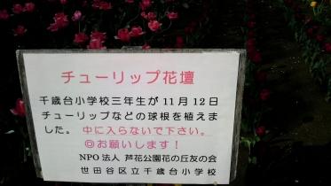 蘆花恒春園1-11