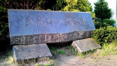 武蔵野の森公園-01