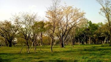 武蔵野の森公園-28