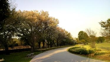 武蔵野の森公園-34