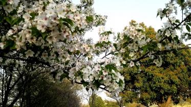 武蔵野の森公園-35
