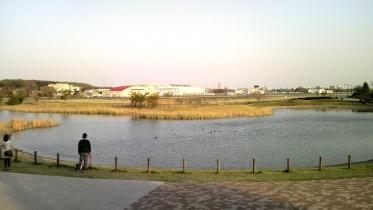 武蔵野の森公園-36